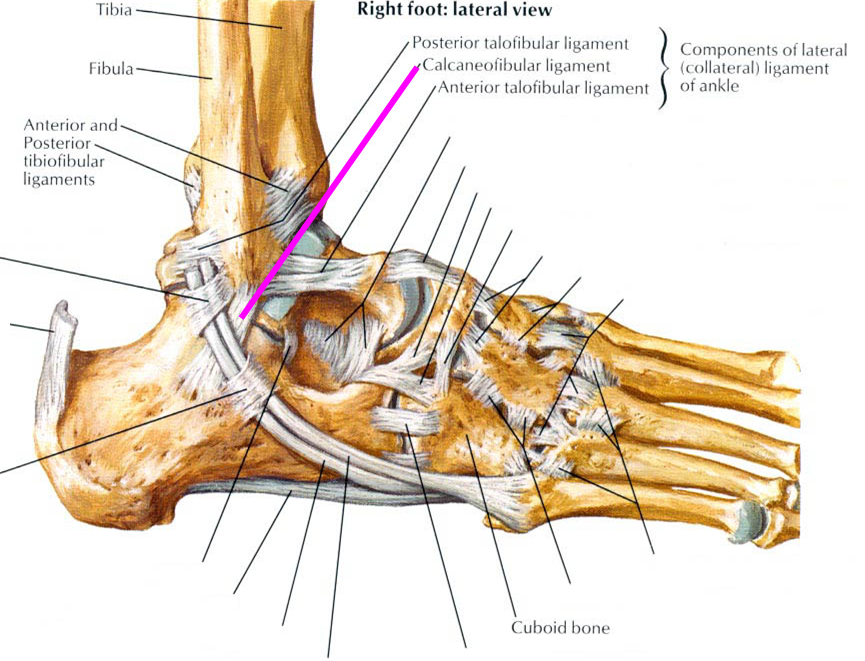 Unlocking the Ankle